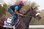 October 28, 2015:  Taris, trained by Simon Callaghan and owned by Michael Tabor , Mrs. John Magnier & Derrick Smith, exercises in preparation for the Breeders' Cup Filly & Mare Sprint at Keeneland Race Track in Lexington, Kentucky on October 28, 2015. Jon Durr/ESW/CSM