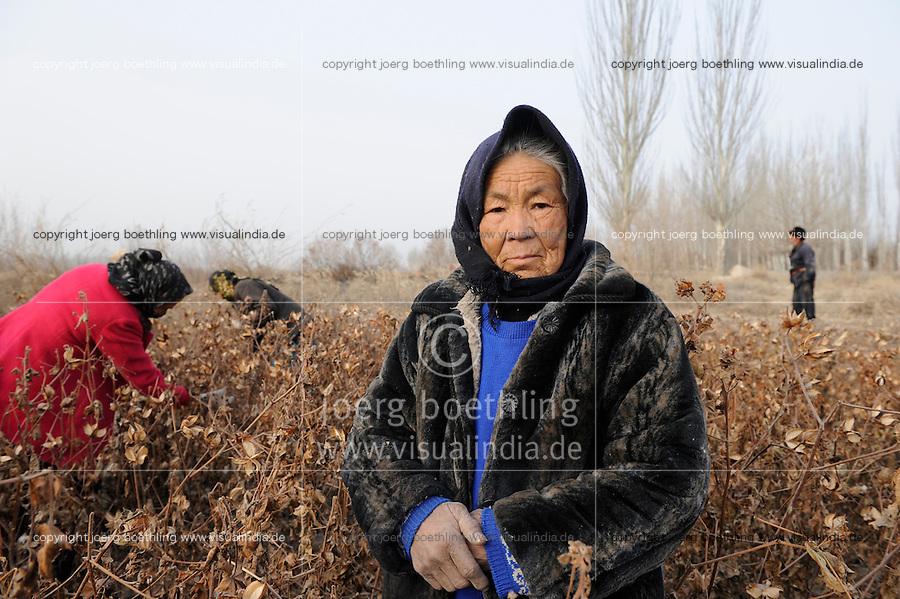 Asien CHINA Provinz Xinjiang Kashgar , uigurische Frauen pfluecken Baumwolle im Winter / CHINA province Xinjing Kashgar , uyghur women harvest cotton during winter