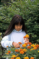 HS18-036z  Child picking flowers, marigolds - Tagetes spp.