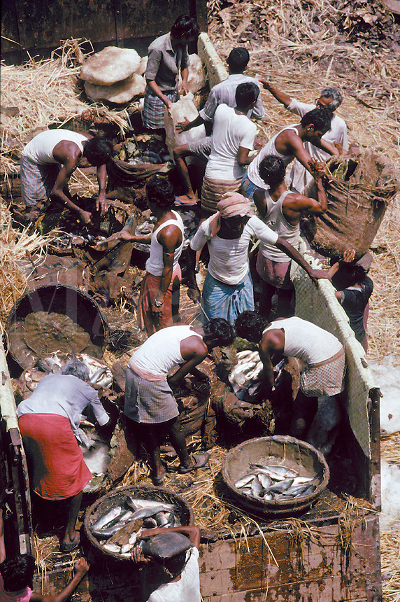 Overhead view of Indian men unloading produce, vegetables and fresh fish from trucks for selling in local markets. India fish markets.