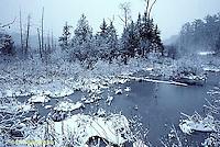 WT11-001b  Pond in winter
