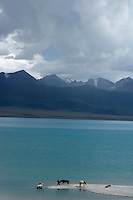 Lake Namtso is the highest saltwater lake in Tibet and in the world with an elevation of some 4800 plus meters, the mountain range in the background rech some 7600 meters plus.