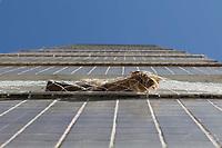 Campinas (SP), 27/08/2020 - Cena urbana - Gato é visto tomando sol em varanda de prédio e seguro por telas de proteção, na cidade de Campinas (SP).