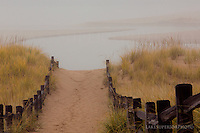 Autrain river, golden beach grass, fog