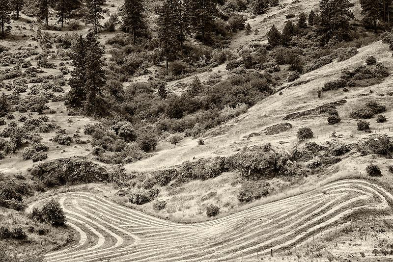 Rows of cut hay. Imnaha Canyon, Oregon.  Hells Canyon National Recreation Area, Oregon