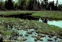 1E17-028x  Mayfly -stream floodplain habitat of endangered mayfly -  Siphlonisca aerodromia