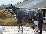 LOUISVILLE, KY - APRIL 25: Royal Obsession (Tapit x Rote, by Tiznow) is bathed after exercising at Churchill Downs, Louisville, KY while preparing for the Kentucky Oaks. Owner Stonestreet Stables LLC, trainer Steven M. Asmussen.(Photo by Mary M. Meek/Eclipse Sportswire/Getty Images)