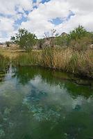 Point of Rocks Spring, Ash Meadows National Wildlife Refuge, Nevada