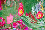 Abstract of pink and red poppies reflected in metal