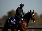 November 3, 2020: Glass Slippers, trained by trainer Kevin A. Ryan, exercises in preparation for the Breeders' Cup Turf Sprint at  Keeneland Racetrack in Lexington, Kentucky on November 3, 2020. Alex Evers/Eclipse Sportswire/Breeders Cup