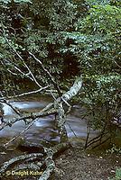 WF09-002z  Stream - Pisgah National Forest, NC