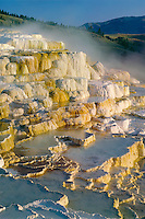 Minerva Terrace<br /> Mammoth Hot Springs<br /> Yellowstone National Park<br /> Rocky Mountains,  Wyoming