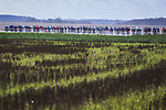 The peloton in action during Stage 2 of the 78th edition of Paris-Nice 2020, running 166.5km form Chevreuse to Chalette-sur-Loing, France. 9th March 2020.<br /> Picture: ASO/Fabien Boukla | Cyclefile<br /> All photos usage must carry mandatory copyright credit (© Cyclefile | ASO/Fabien Boukla)