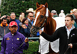 October 03, 2015:  Champion, Wise Dan parades in the paddock.  Candice Chavez/ESW/CSM