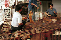 Cats are selected by a restaurant owner at a huge Wild Animal Market that specializes in cat meat. Cats are commonly reared in the Chinese countryside specifically for sale to restaurants, where cat meat is now very popular...PHOTO BY SINOPIX
