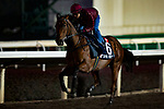 SHA TIN,HONG KONG-DECEMBER 08 : Joyful Trinity,trained by John Moore,exercises in preparation for the Hong Kong Mile at Sha Tin Racecourse on December 8,2017 in Sha Tin,New Territories,Hong Kong (Photo by Kaz Ishida/Eclipse Sportswire/Getty Images)