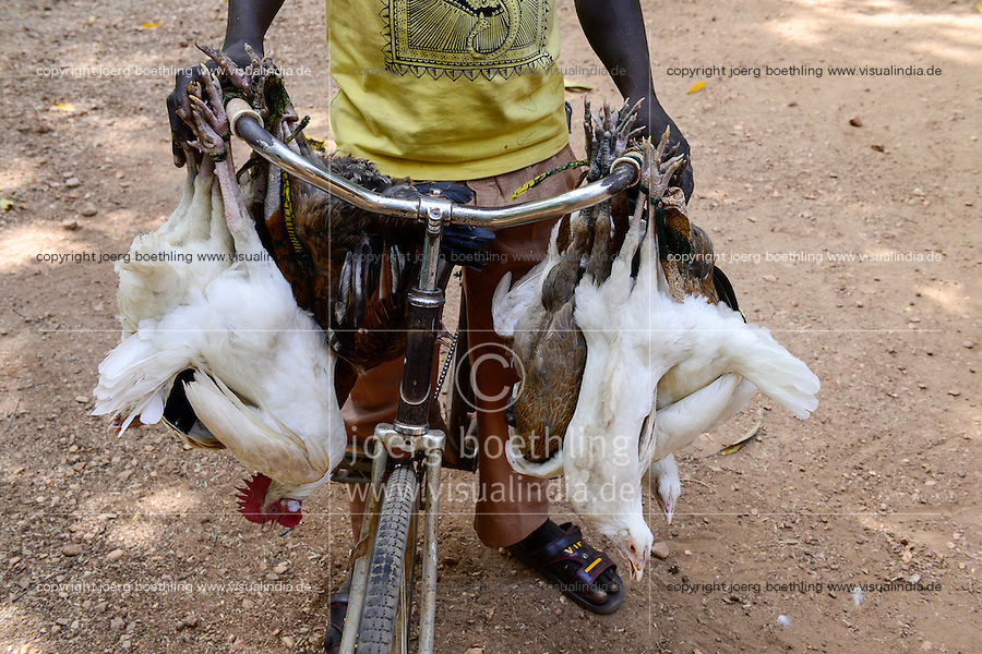 BURKINA FASO , Fada N´Gourma, village TINDANGOU, live chicken transport with bicycle for direct supply