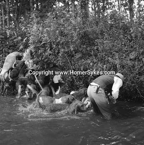 The Valley Minkhounds...Perry Stares, Master of the Hampshire Minkhounds, on the river Enborne at a joint meet with the Valley Minkhounds. Near Aldermaston, Berkshire...Hunting with Hounds / Mansion Editions (isbn 0-9542233-1-4) copyright Homer Sykes. +44 (0) 20-8542-7083. < www.mansioneditions.com >