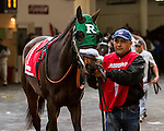 OZONE PARK, NY - NOVEMBER 26, 2016:Romantic Music #1 in the post parade for the  Grade 2 Demoiselle Stakes for 2-year old fillies, at Aqueduct Racetrack . (Photo by Sue Kawczynski/Eclipse Sportswire/Getty Images)