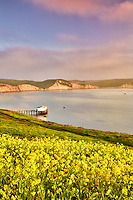 Calm water and wildflowers of Drakes Bay. Point Reyes National Seashore. California