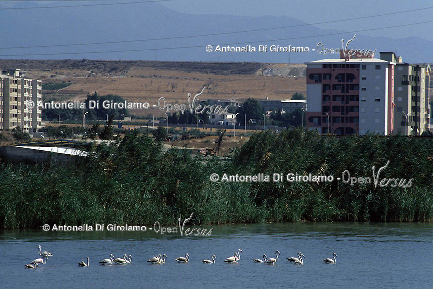 Il Parco Naturale Regionale Molentargius - Saline viene istituito nel 1999..Il parco Molentargius, ha un ecosistema ottimale per la sosta e lo svernamento di uccelli nidificanti e di passo, molte specie sono protette a livello comunitario..The Regional Natural Park Molentargius - Saline was established in 1999 .Molentargius the park has an ideal ecosystem for the staging and wintering birds and breeding step, many species are protected at Community level....