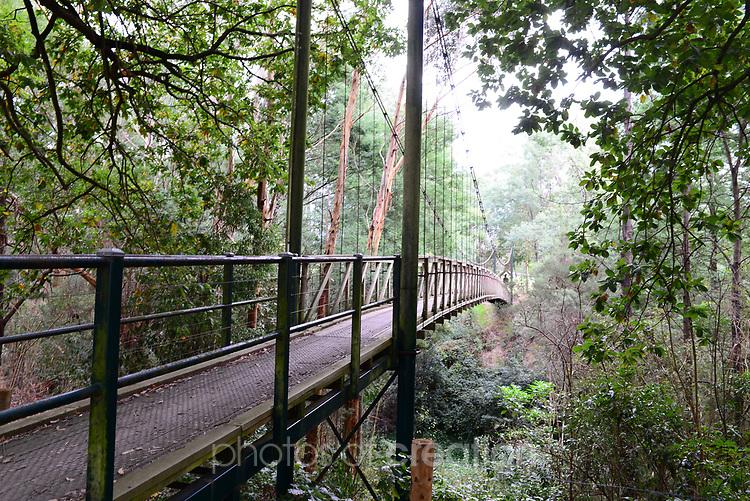 Bridge in the mist<br /> Suspension bridge at Loch Victoria