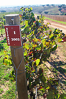 alicante bouschet vines herdade de sao miguel alentejo portugal