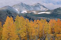 Aspens and Dunderberg Peak<br /> Green Creek Meadows<br /> Toiyabe National Forest<br /> Sierra Nevada,  California