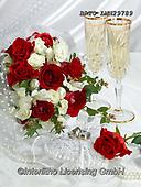 Alfredo, FLOWERS, BLUMEN, FLORES, photos+++++,BRTOLMN29789,#f#, EVERYDAY ,rose,roses