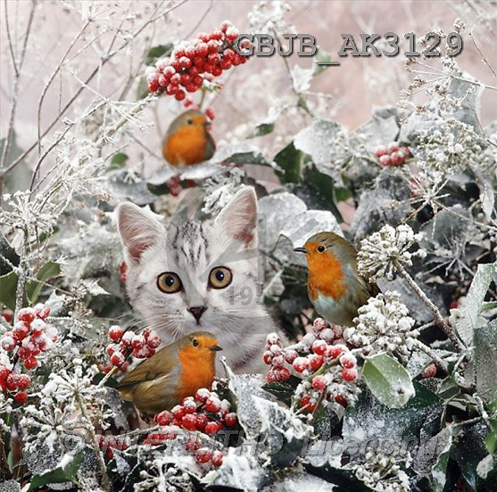 Kim, CHRISTMAS ANIMALS, photos(GBJBAK3129,#XA#) ,puzzles