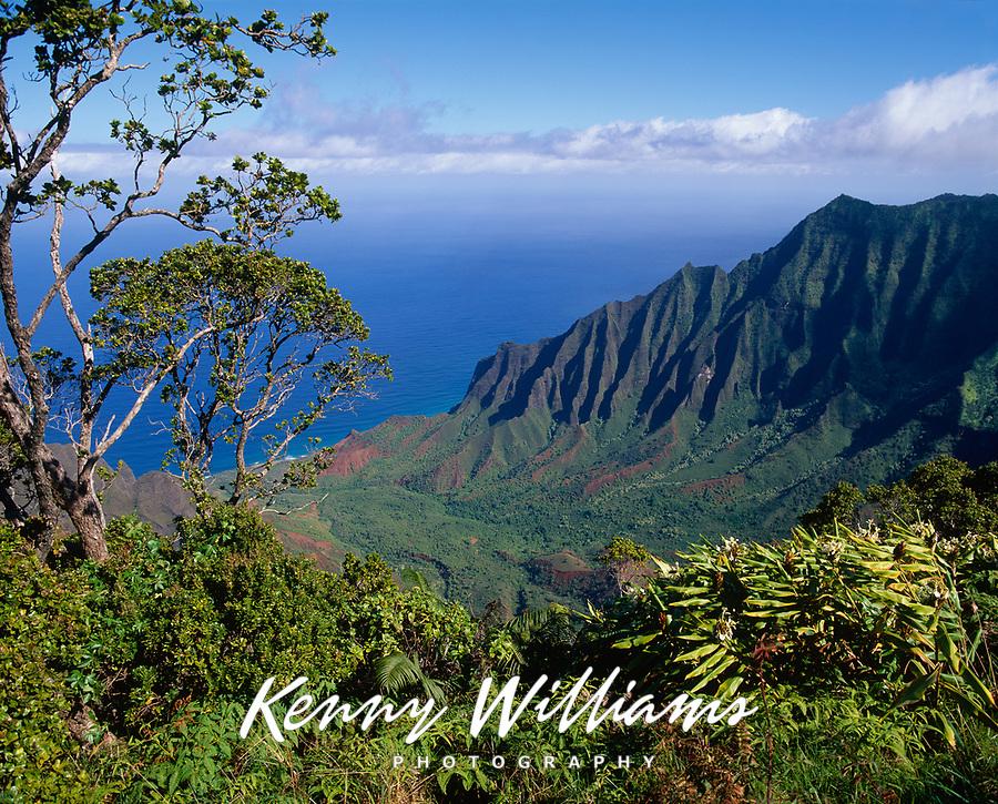 Kalalau Valley & Ohia Tree, Na Pali Coast State Park, Kauai, Hawaii, USA.