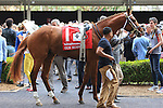 NEW ORLEANS, LA - MARCH 26: Gun Runner walking the paddock before the 103rd Louisiana Derby at Fairgrounds Race Course on March 26, 2016 in New Orleans, Louisiana. (Photo by Steve Dalmado/Eclipse Sportswire/Getty Images)