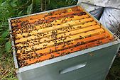 Ruche de Christelle Appaganou, apicultrice à Bourail (Les ouvrières de la Taraudière)