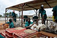 MOZAMBIQUE, Chimoio, chicken farm and slaughterhouse Agro-Pecuaria Abilio Antunes, delivery of chicken at slaughterhouse / MOSAMBIK, Chimoio, Huehnerfarm und Schlachthaus Agro-Pecuaria Abilio Antunes, Anlieferung der broiler zum Schlachten