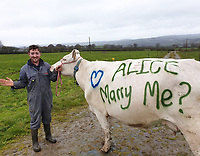 2019 04 30 Sion Thomas marriage proposal on cow, Wales, UK