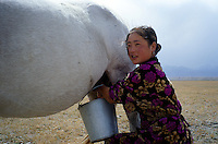 A Kyrgyz woman collecting milk from a female horse...The M41 Highway from the Ismaili capital of Khorog to the south capital of Kyrgyzstan - Osh, via the head district of Badakhshan - Murgab and the Akbajtal Pass at 4655 meters.