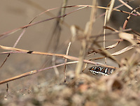 The dry season isn't great for snake viewing, but we did have this sand snake come through our campsite in Kruger.