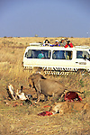 Tourists Watching Lions Feeding On Wildebeest