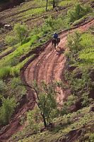 Afrique/Afrique du Nord/Maroc/Env d' Immouzer: Homme sur son âne dans la Vallée du Paradis