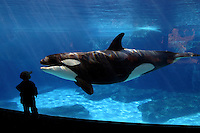 YOUNG BOY (MR) AND ORCA / KILLER WHALE Orcinus orca, Sea World in San Diego, California, USA.