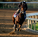November 1, 2020: Calibrate, trained by trainer Steven M. Asmussen, exercises in preparation for the Breeders' Cup Juvenile at Keeneland Racetrack in Lexington, Kentucky on November 1, 2020. Scott Serio/Eclipse Sportswire/Breeders Cup /CSM