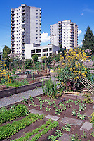 Community Urban Garden, North Vancouver, BC, British Columbia, Canada - Sustainable Gardening on City Allotment
