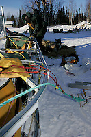 Jeff King changes the plastic runners on his sled at the Nikolai checkpoint.  2005 Iditarod Trail Sled Dog Race.