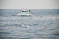 Gulf of Biscay, Spain. The Bluefin tunas are feeding on sardines on the surface of the flat calm sea and a recreational fishing boat is approaching at casting distance