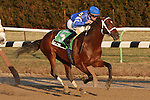 Favorite Alpha with Ramon Dominguez wins the 37th running of the $150,000 Count Fleet, for 3-year olds, going 1 mile and 70 yards, at Aqueduct. Trainer Kiaran McLaughlin.  Owner Godolphin Racing LLC.