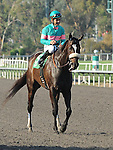 October 2, 2010.Zneyatta riden by Mike Smith wins The Lady's Secret Stakes at Hollywood Park, Inglewood, CA._Cynthia Lum/Eclipse Sportswire.com