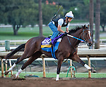 October 26, 2014:  Untapable, trained by Steven Asmussen, exercises in preparation for the Breeders' Cup Distaff at Santa Anita Race Course in Arcadia, California on October 26, 2014. Scott Serio/ESW/CSM
