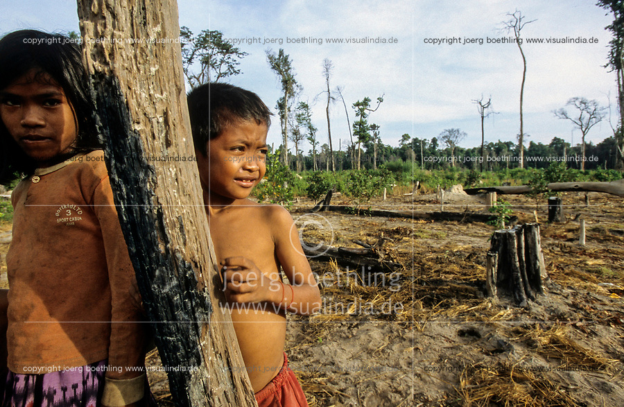 CAMBODIA, Mekong region, Stung Treng, logging of rainforest, children of settlers on deforested plots