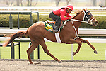 07 April 2011.  Hip #34 E Dubai - New Dimension filly consigned by Bloodstock Management.