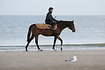 August 15, 2021, Deauville (France) - Racehorse after training at the beach in Deauville. [Copyright (c) Sandra Scherning/Eclipse Sportswire)]